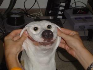 happy-dog-forced-smile-freaky-1303555329n