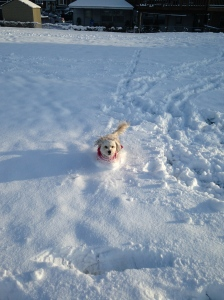 Dashing through the snow…enjoying the ride!