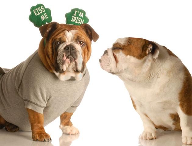 dogs-st-patricks-day-kiss-me-im-irish