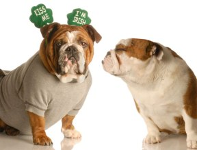 dogs-st-patricks-day-kiss-me-im-irish