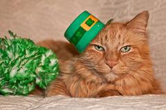 st-patricks-day-cat-37688880