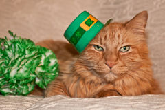 st-patricks-day-cat-37688880